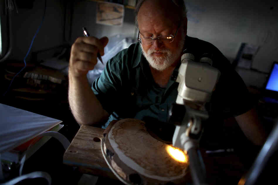 University of Arizona professor Tom Swetnam examines a tree sample at the Laboratory of Tree-Ring Research in Tucson, Ariz. Swetnam's research focuses on understanding how forest fires are influenced by climate change.