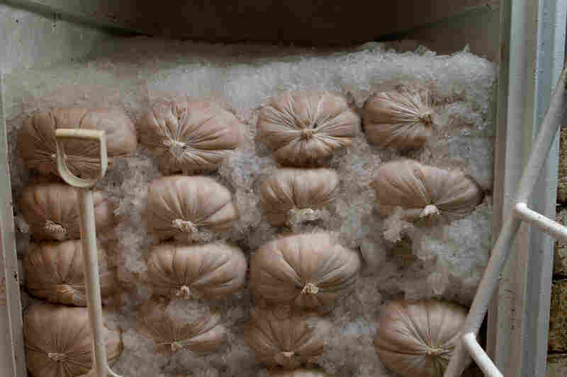 Bags of Atlantic scallops stacked in the boat's hold. The eight-day voyage yielded a catch worth more than $250,000.