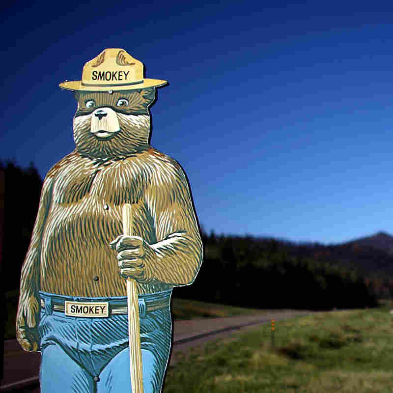 How The Smokey Bear Effect Led To Raging Wildfires