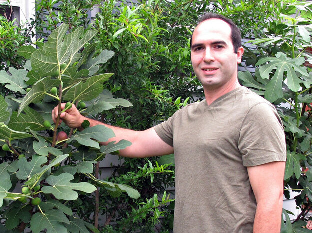 Bassem Samaan, of Bethlehem, Pa., shows off one of many rare fig varieties in his garden.