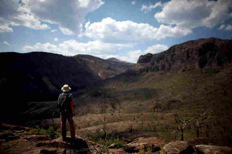 Jorge Castro looks onto the Cerro Picacho and the St. Peter's Dome trail, adjacent to the Bandelier National Monument in New Mexico. Last year's Las Conchas fire was the third in a string of blazes that devastated the area.