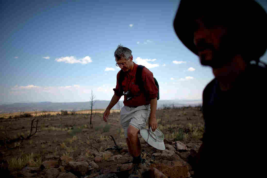 Craig Allen, left, a research ecologist with the U.S. Geological Survey, and Jorge Castro, a visiting professor of ecology from Spain, survey a plateau ravaged during last year's Las Conchas fire in New Mexico. The megafire burned over 150,000 acres of forest.