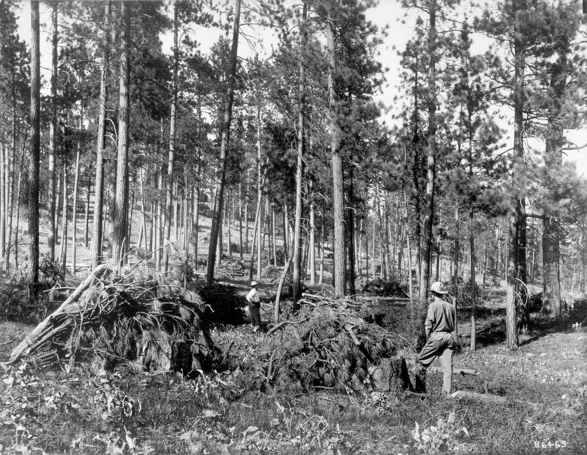 1909. Looking northeast through a more heavily stocked ponderosa pine stand. The ground cover around C. H. Gregory (in distance) and W. W. White is predominantly herbaceous species with a high incidence of basalmroot. The dark low-growing shrub around White appear to be snowberry. Large willows are evident on the left edge of the photo and in front of White.