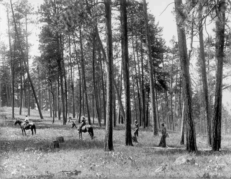 1909. Facing nearly due west from ridge northeast of Como Lake. Light selection cut in open ponderosa pine. Ground cover is comprised of perennial grasses and forbs, including basalmroot. A few low-growing bitterbrush plants can be seen in the vicinity of horses and in distance on left. A group of willows can be seen behind horsemen at left center. (Original captions)