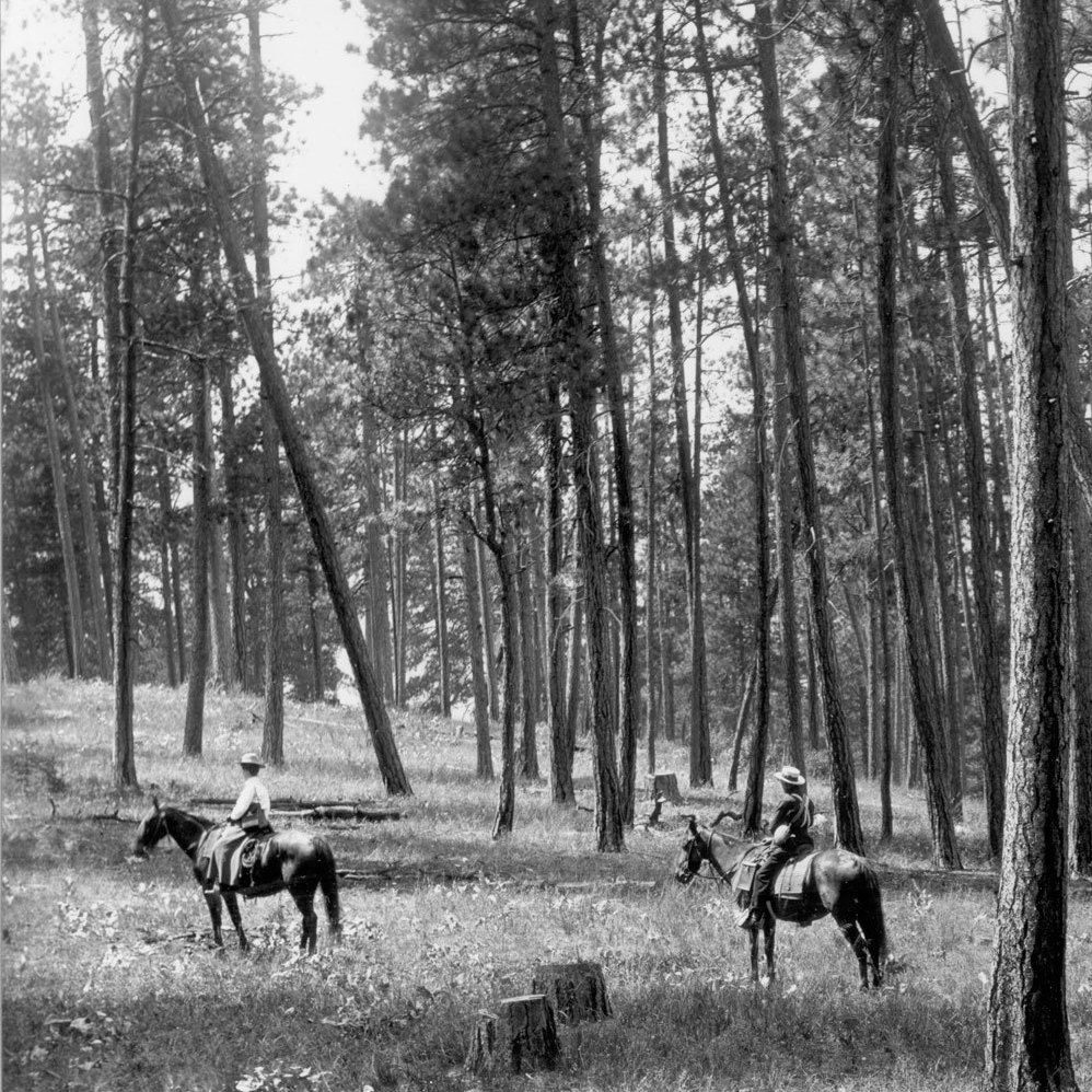 1909. Facing nearly due west from ridge northeast of Como Lake. Light selection cut in open ponderosa pine. Ground cover is comprised of perennial grasses and forbs, including basalmroot. A few low-growing bitterbrush plants can be seen in the vicinity of horses and in distance on left. A group of willows can be seen behind horsemen at left center.