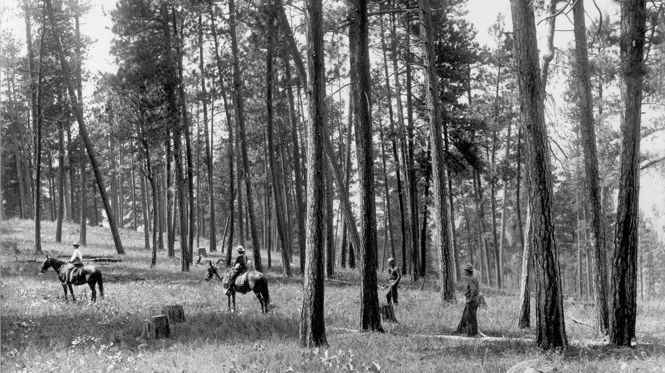 1909. Facing nearly due west from ridge northeast of Como Lake. Light selection cut in open ponderosa pine. Ground cover is comprised of perennial grasses and forbs, including basalmroot. A few low-growing bitterbrush plants can be seen in the vicinity of horses and in distance on left. A group of willows can be seen behind horsemen at left center. (U.S. Forest Service)