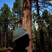 """William Armstrong, fire manager for the Santa Fe National Forest service, says lush forests can be a """"plague."""""""