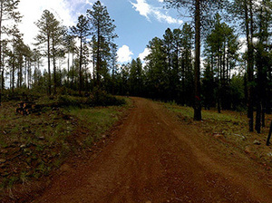 Managed forest in Arizona.