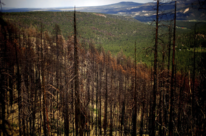 Northern Arizona University researchers are trying to study the effects of fire on treated and untreated forest areas in Apache-Sitgreaves.