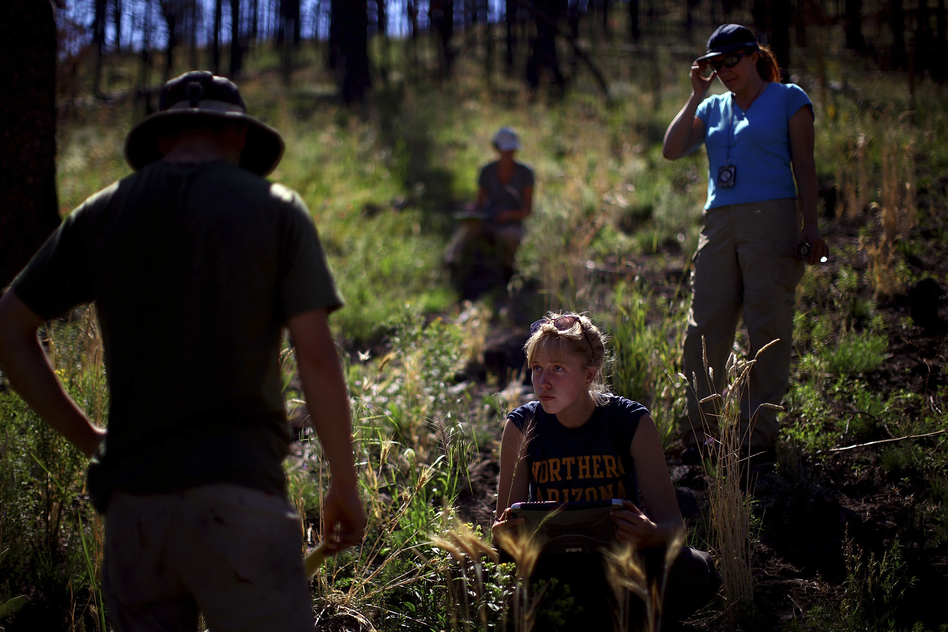 Northern Arizona University students Zac Timmons (left) and Karen Kralicek (center) work with plant ecologist Judy Springer in the Apache-Sitgreaves National Forests in east-central Arizona. They are studying the effects of forest restoration treatments following the Wallow Fire of 2011. (NPR)