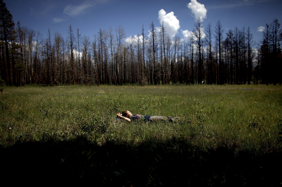 Madison Daniels, a student at Northern Arizona University, takes a short break from gathering data in a meadow in Apache-Sitgreaves. Both students and faculty live in the forest for weeks while they conduct their ecological research. (NPR)