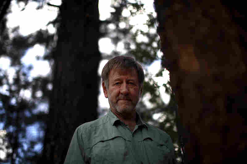Wally Covington is director of the Ecological Restoration Institute at Northern Arizona University in Flagstaff. He helped create the 4FRI project, whose goal is to restore the natural Ponderosa pine forest.