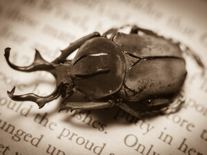 A beetle sits on an open page.