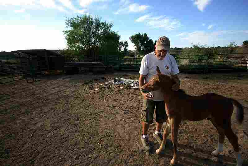 "Ontario resident Hank Grossman breeds and raises horses on his plot of land. Pictured with Hank is Wyatt, a week-old stallion. For the next two or three years, Hank will continue to raise Wyatt. But when he matures, Grossman will either sell him or keep him to breed. When asked what draws him to these animals, he said, ""I don't know. I like their style. I get along with them."""
