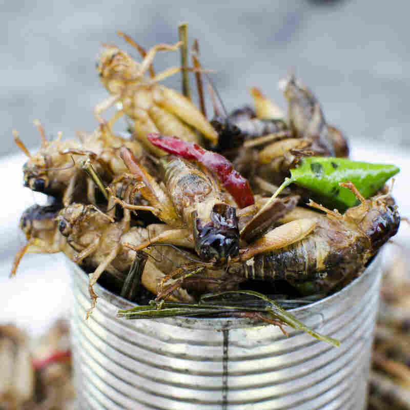 Grow Your Own Locust Kit Could Someday Help Feed African Refugees