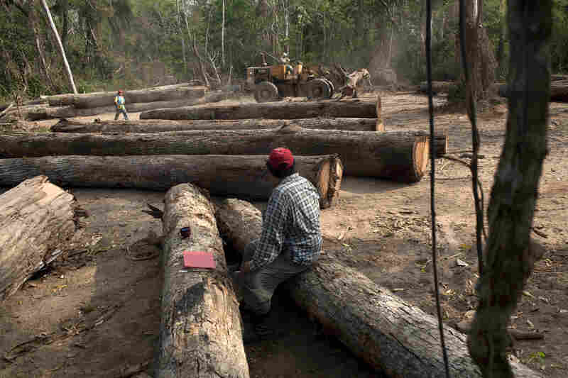 A logger watches a machine move logs to be measured, trimmed and marked before inspection by ABT — Bolivia's agency of forests and land. They will then be transported to Ascencion de Guarayos.