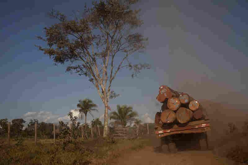 A truck takes logs to the town of Ascencion de Guarayos in the Bolivian Amazon jungle.
