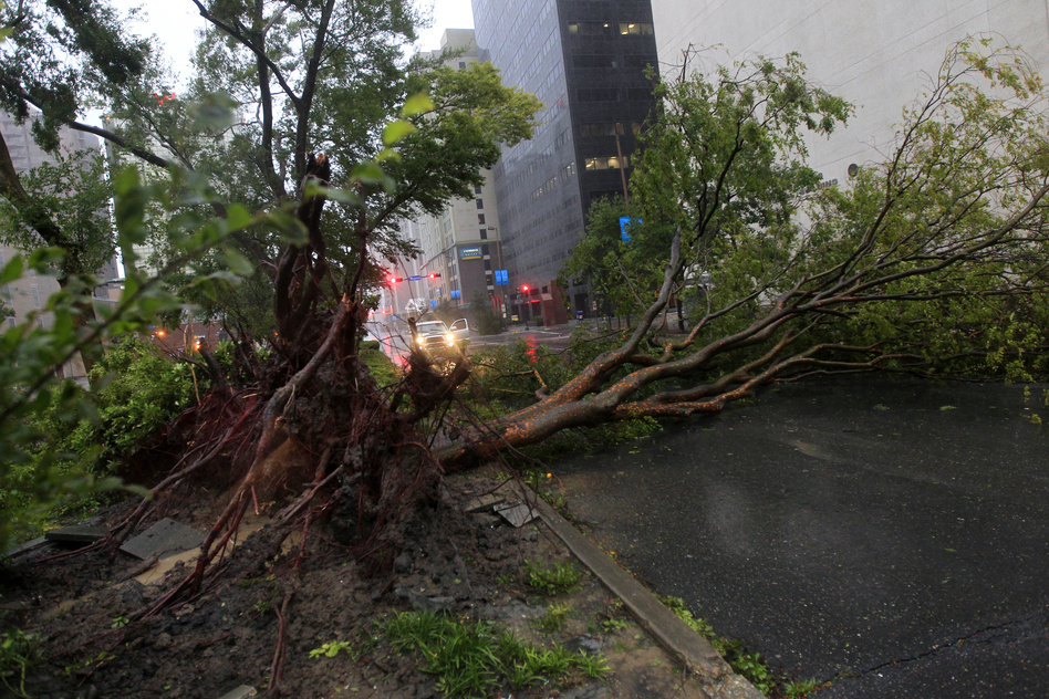 An uprooted tree lies across Poydras Street in downtown New Orleans. Isaac packed 80-mph winds, making it a Category 1 hurricane. (AP)