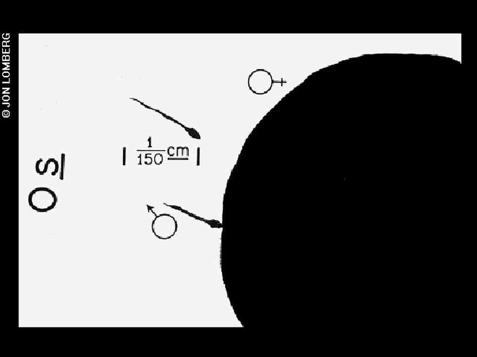 Diagram of conception