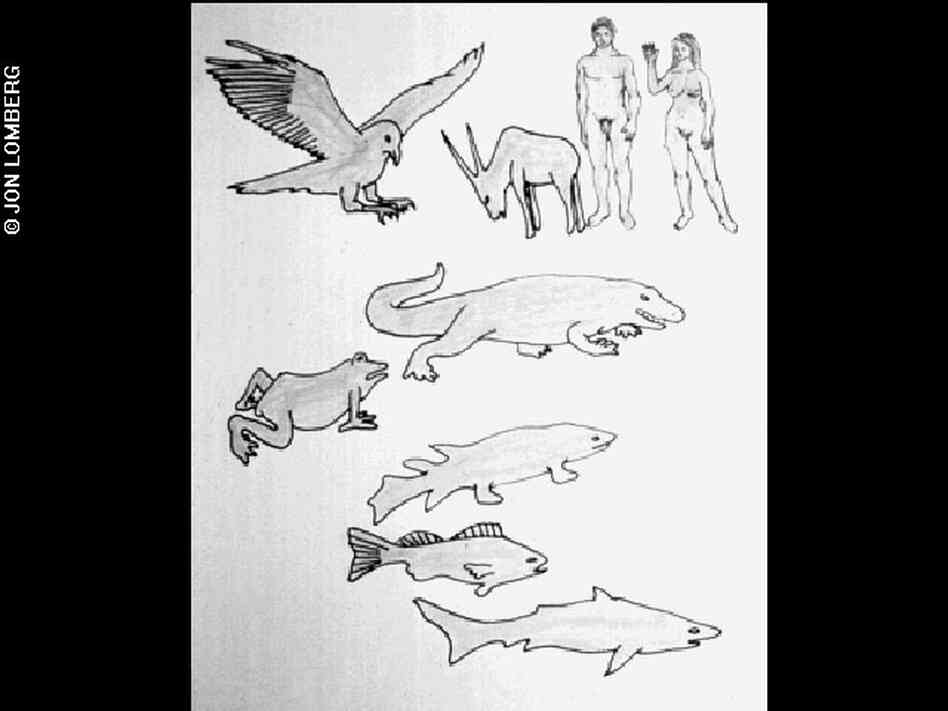 Diagram of vertebrate evolution