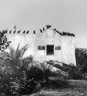 This image shows a Parsi Tower of Silence, circa 1955, near Mumbai, India. The bodies of the dead are left here to be disposed of by vultures.