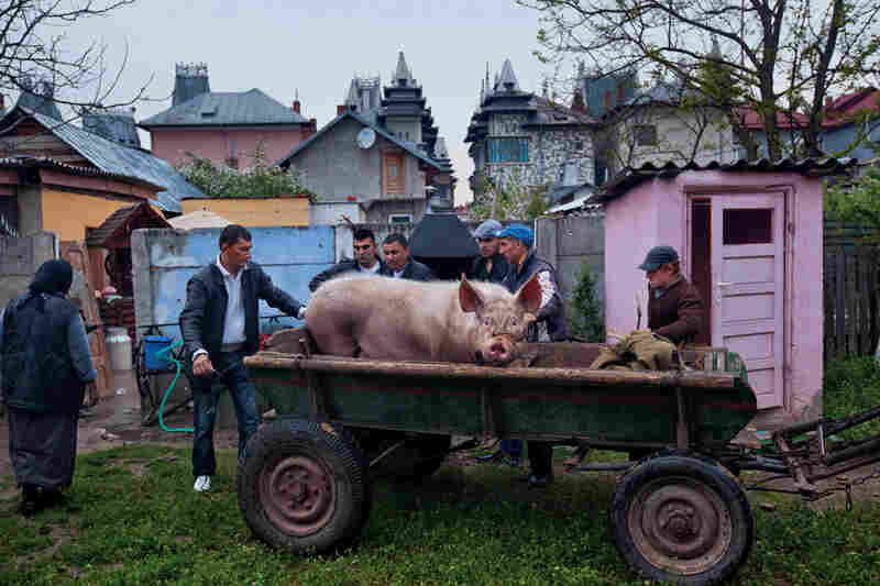 """In a backyard in the wealthy quarter, traditional village habits maintain a hold. On the day of a baptism, men send off a gift pig to the godparents. Some affluent Roma, especially older ones who grew up traveling in horse-drawn caravans, are uneasy in the mansions and still use outhouses and outdoor kitchens."""