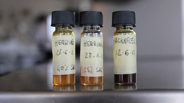 The Nordic Food Lab experiments with garum, a form of fish sauce familiar to the ancient Romans. (courtesy Nordic Food Lab)