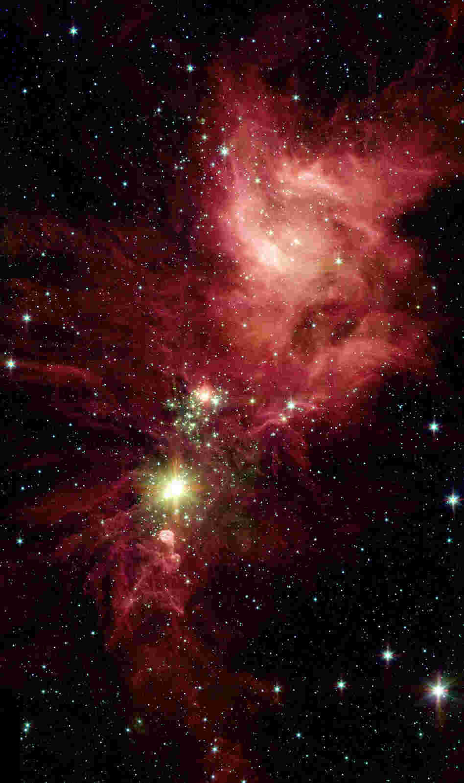 Newborn stars, hidden behind thick dust, are revealed in this image of a section of the Christmas Tree Cluster from NASA's Spitzer Space Telescope.
