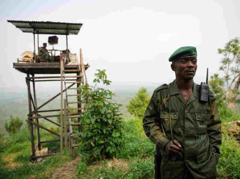 A Virunga National Park ranger stands at an observation post at the edge of the park in eastern Democratic Republic of Congo on July 17. M23 rebels now occupy Rumangabo and several other locations within Africa's oldest national park, which is also affected by other armed groups.