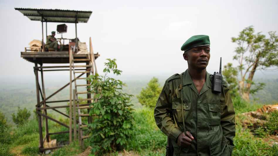 A Virunga National Park ranger stands at an observation post at the edge of the park in eastern Democratic Republic of Congo on July 17. M23 rebels now occupy Rumangabo and several other locations within Africa's oldest national park, which is also affected by other armed groups. (AFP/Getty Images)