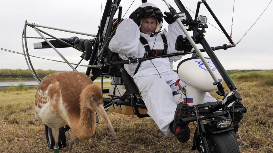 Russian President Vladimir Putin prepares to pilot a hang glider to lead a flock of cranes to their winter habitat. (AFP/Getty Images)