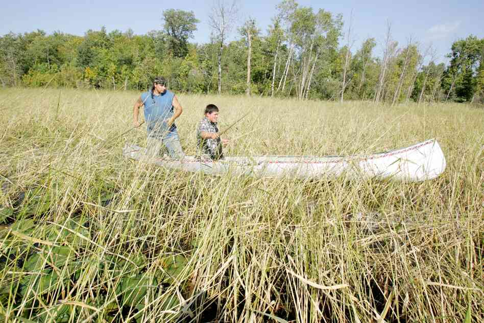 Joe Hoagland, left, pushes a canoe through a wild rice bed as 14-year-old Chris Salazar learns how to harvest the rice