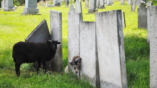 Charlotte, Vt., has a new, old-school strategy to keep cemetery grass cut: Let animals do the work.