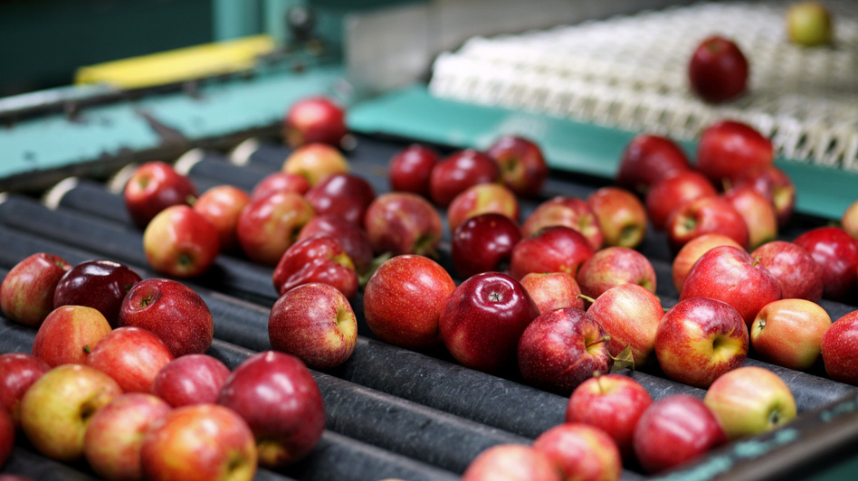 The Michigan Gala apples on this packing line will soon be in short supply. After a mild fall and winter, then a late-April freeze, Michigan's apple cultivation has dropped 90 percent. (NPR)