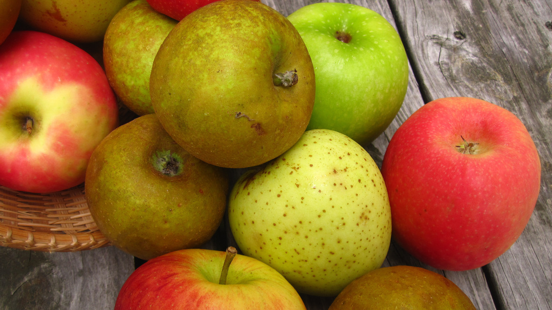 Apples spilling out of a basket
