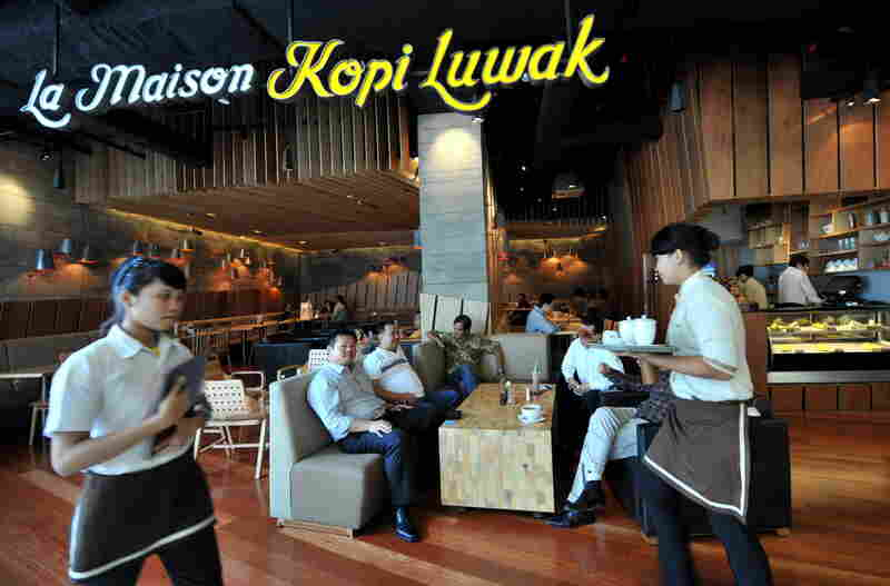 At a coffee shop in Indonesia, one cup of kopi luwak can go for around $9 U.S.