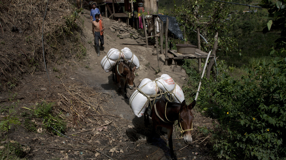 Farmers bring goods to town in the hamlet of Villanueva in Tolima state on Sept. 7. Travel in this mountainous region usually takes place by mule or horse. (Carlos Villalon for NPR)