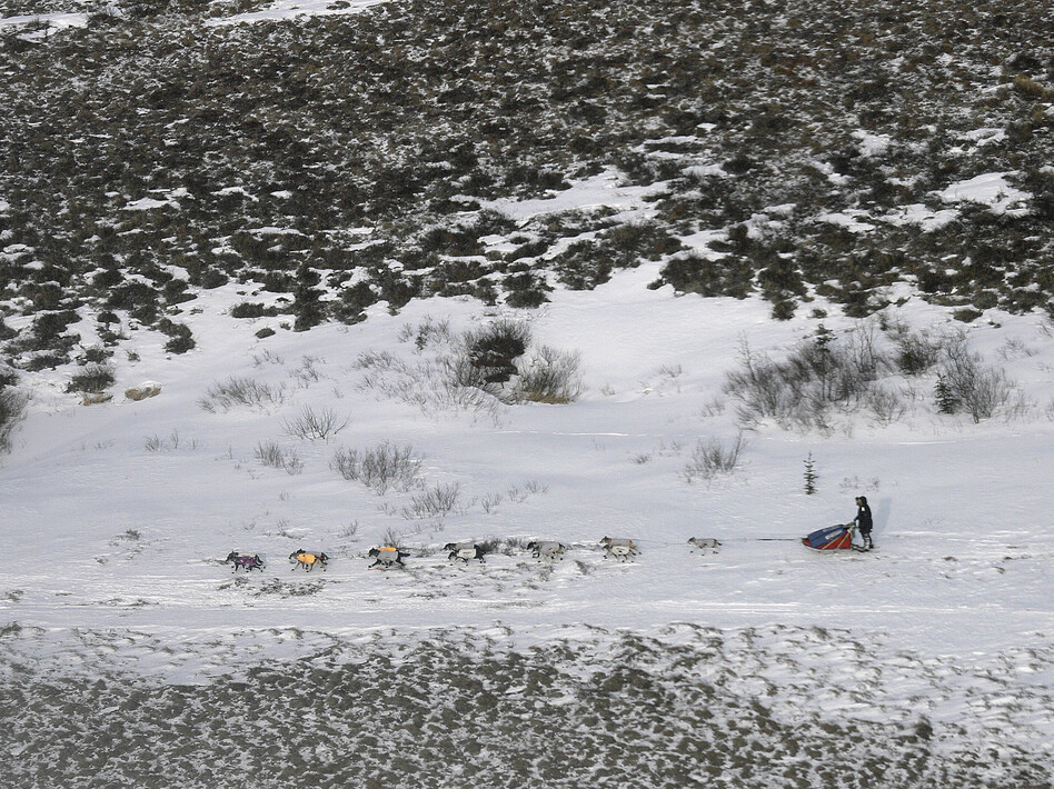 Researchers say that springtime snow is melting in the Arctic even faster than Arctic ice. That means less sunlight is reflected off the surface. Bare land absorbs more solar energy, which can contribute to rising temperatures on Earth. Above, a musher races along the Iditarod in the Alaskan tundra in 2007.