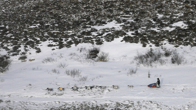 Researchers say that springtime snow is melting in the Arctic even faster than Arctic ice. That means less sunlight is reflected off the surface. Bare land absorbs more solar energy, which can contribute to rising temperatures on Earth. Above, a musher races along the Iditarod in the Alaskan tundra in 2007. (AP)