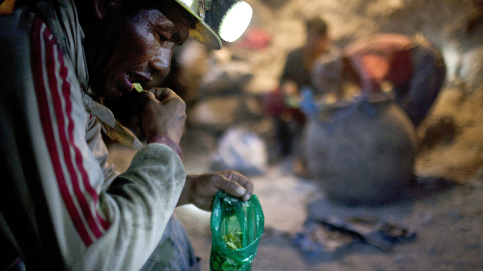 Elogio Tola, 45, a miner since he was a boy, takes a break with coca leaves, chewing bagfuls to ward off hunger and exhaustion in the Cerro Rico silver mines in Potosi last month. (Carlos Villalon for NPR)