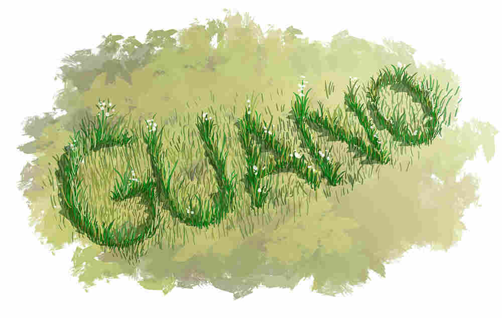 Guano in grass.