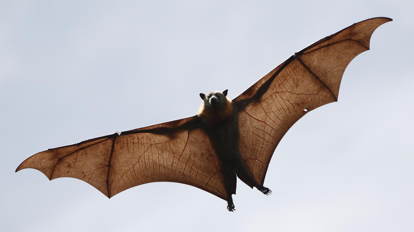 Holy Bat Virus Genome Hints At Origin Of Sars Like Virus