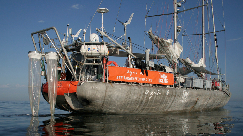 The 118-foot research schooner Tara made an around-the-world expedition over 21/2 years. Scientists aboard discovered up to a million new species of plankton. Now begins the work of determining how climate change might be affecting these microorganisms. (Tara Expeditions)