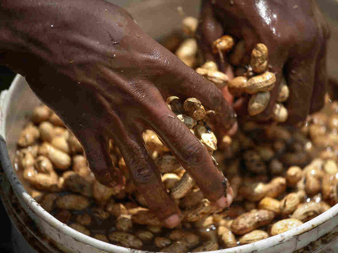 It costs more to buy peanuts from Haitian farmers because their labor costs are high. Planting and harvesting is done by hand.