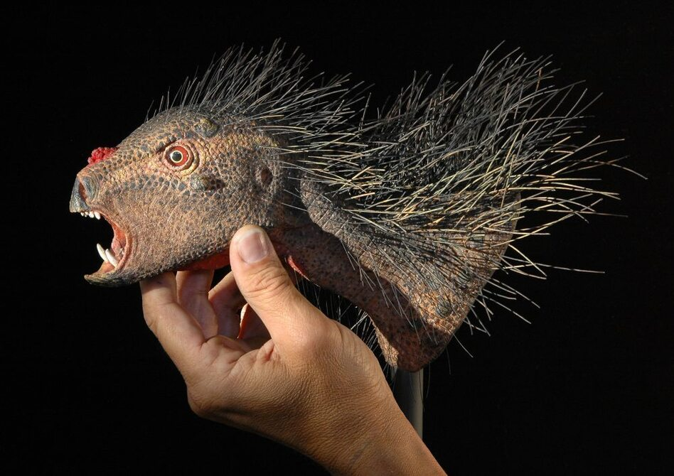 """With jaws only 1 inch in length, the plant-eating <em>Pegomastax</em> (""""thick jaw"""") was one of the smallest dinosaurs ever discovered. The photo above is of a close relative of the Pegomastax."""