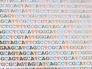 Each strand of DNA is written in a simple language composed of four letters: A, T, C and G.