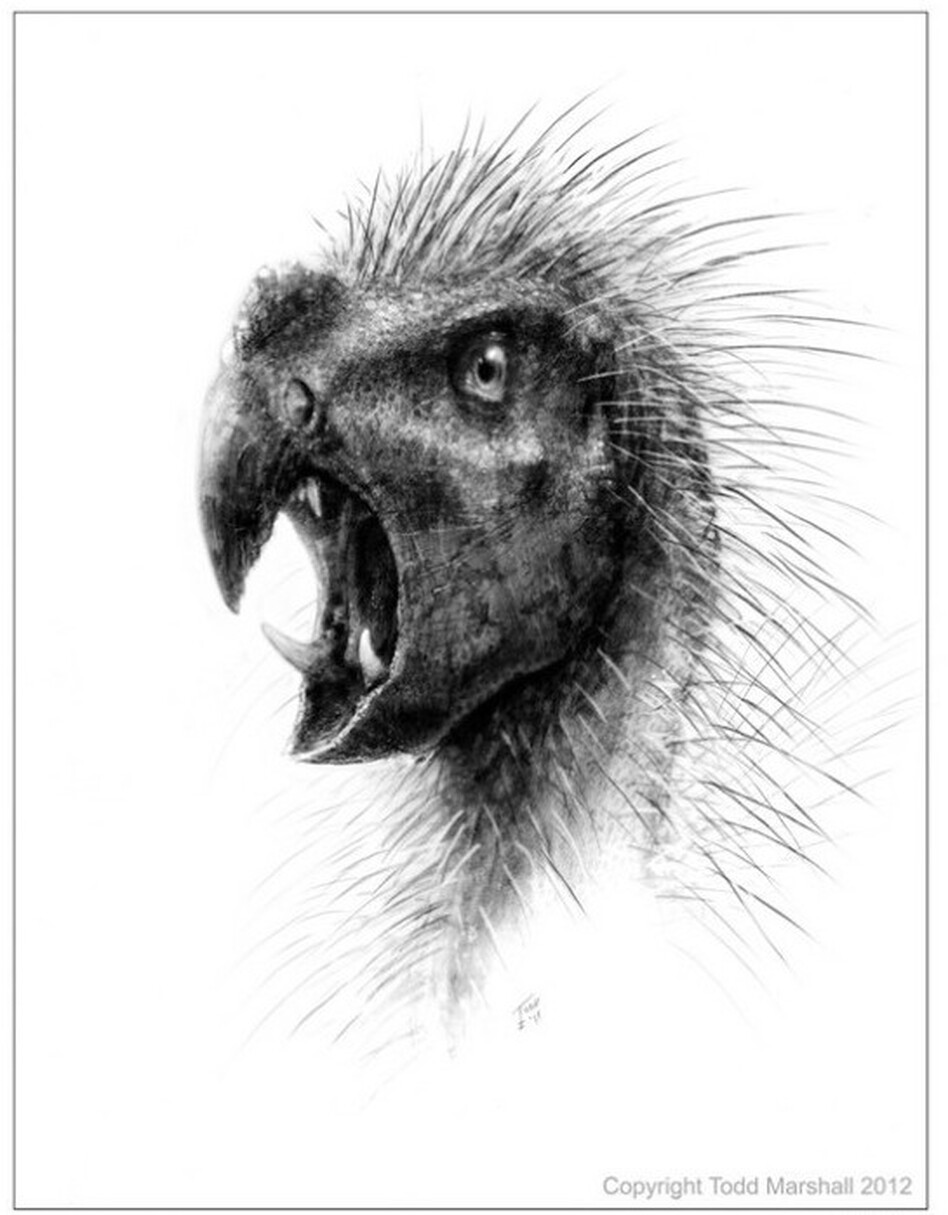 <em>Pegomastax africanus</em> stood less than two feet tall and sported sharp fangs and a beak.