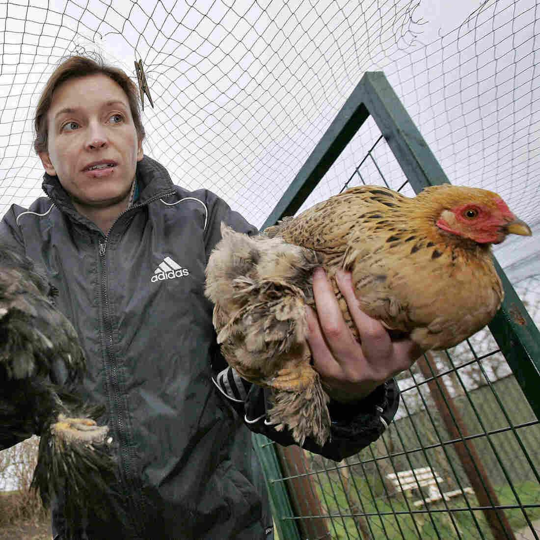 Debate Heats Up About Contentious Bird Flu Research