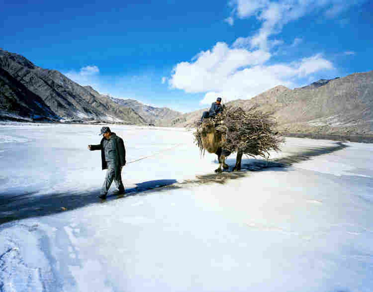 Jimira's husband, Kapan, and a relative carry firewood by camel, carefully traversing a path of sand and soil across a frozen river to avoid slipping.