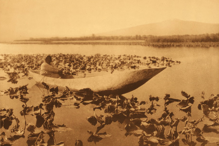The Klamath tribes, as captured by Curtis, would gather wokas, a type of water lilly, and eat the edible parts.